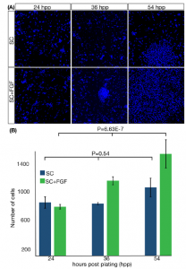 FGF2 modulates simultaneously the mode, the rate of division and the growth fraction in cultures of radial glia